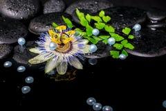 Todavía del balneario vida de la flor de la pasionaria, helecho de la rama, sto del basalto del zen Imagenes de archivo