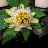 Todavía del balneario vida de la flor de la pasionaria, hoja verde con descenso, toalla Foto de archivo libre de regalías
