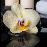 Todavía del balneario vida de la orquídea amarilla de la flor, phalaenopsis con descensos Fotos de archivo
