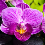 Todavía del balneario vida de la orquídea violeta pelada (phalaenopsis), b verde Fotografía de archivo