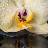 Todavía del balneario vida hermosa con la orquídea amarilla de la flor, phalaenopsis Imagen de archivo