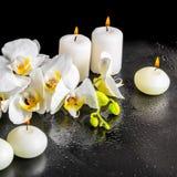 Todavía del balneario vida hermosa de la flor blanca floreciente de la orquídea Fotografía de archivo
