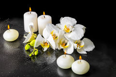 Todavía del balneario vida hermosa de la flor blanca floreciente de la orquídea Imágenes de archivo libres de regalías