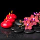 Todavía del balneario vida hermosa de la flor roja floreciente de la orquídea de la ramita Imagen de archivo libre de regalías