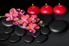 Todavía del balneario vida hermosa de la flor roja floreciente de la orquídea de la ramita Fotos de archivo