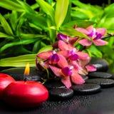 Todavía del balneario vida hermosa de la flor roja floreciente de la orquídea de la ramita Fotografía de archivo