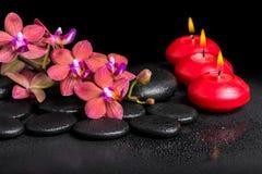 Todavía del balneario vida hermosa de la flor roja floreciente de la orquídea de la ramita, pha Fotos de archivo libres de regalías