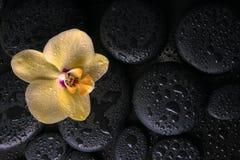Todavía del balneario vida hermosa de la orquídea amarilla (phalaenopsis) Imagenes de archivo