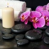 Todavía del balneario vida hermosa de la ramita floreciente de la violeta pelada Imagen de archivo libre de regalías