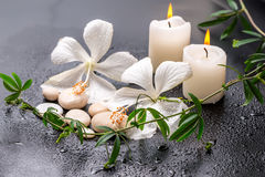 Todavía del balneario vida hermosa del hibisco blanco delicado, passio de la ramita Foto de archivo libre de regalías