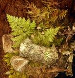 Todavía del bosque vida Imagen de archivo libre de regalías