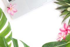 Todavía del concepto ordenador portátil botánico superior tropical de la vida Fotos de archivo libres de regalías