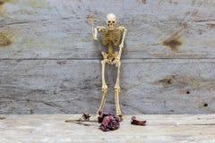 Todavía del esqueleto vida humana, estilo de la oscuridad del vintage Imágenes de archivo libres de regalías