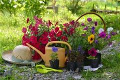 Todavía del jardín vida con el sombrero de paja, las flores de la petunia y la regadera Imagen de archivo libre de regalías