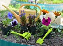 Todavía del jardín vida con las flores del verano, el pensamiento, la petunia, la margarita, y las herramientas de funcionamiento Foto de archivo libre de regalías