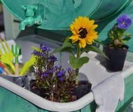 Todavía del jardín vida con las flores en el establecimiento de los potes y de las herramientas de funcionamiento Imagen de archivo