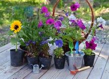 Todavía del jardín vida con las flores en el establecimiento de los potes y de las herramientas de funcionamiento en tablones Fotografía de archivo libre de regalías