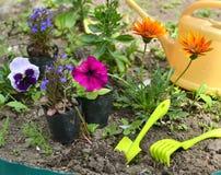 Todavía del jardín vida con las petunias, las flores del pensamiento y las herramientas en cama de flor Fotos de archivo libres de regalías