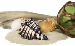 Todavía del mar vida con el shell Foto de archivo