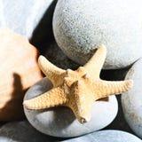 Todavía del mar vida con las estrellas de mar sobre el guijarro gris Imagenes de archivo