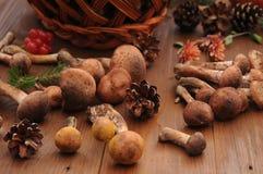 Todavía del otoño setas de la vida en una tabla Fotografía de archivo