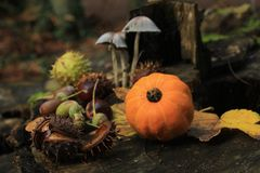 Todavía del otoño vida Foto de archivo libre de regalías