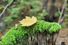 Todavía del otoño vida Fotos de archivo