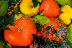 Todavía del otoño vida, acción de gracias - cosecha de diversas calabazas con las hojas coloridas Imágenes de archivo libres de regalías