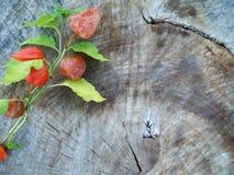 Todavía del otoño vida con el physalis Imagen de archivo