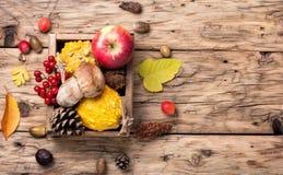Todavía del otoño vida con la calabaza, manzana, setas fotografía de archivo
