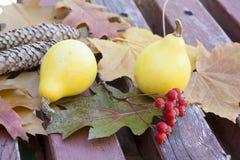 Todavía del otoño vida con las calabazas, los conos spruce, las hojas de otoño y la ceniza de montaña en el viejo fondo de madera Foto de archivo libre de regalías