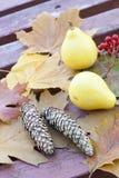 Todavía del otoño vida con las calabazas, los conos spruce, las hojas de otoño y la ceniza de montaña en el viejo fondo de madera Imagen de archivo libre de regalías
