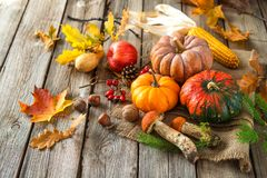 Todavía del otoño vida con las calabazas, las mazorcas de maíz, las frutas y las hojas Foto de archivo