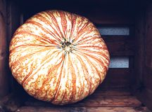 Todavía del otoño vida con las calabazas orgánicas Imagen de archivo libre de regalías
