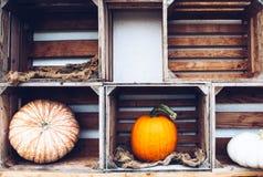 Todavía del otoño vida con las calabazas orgánicas Foto de archivo