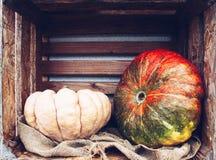 Todavía del otoño vida con las calabazas orgánicas Imagenes de archivo