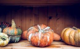 Todavía del otoño vida con las calabazas orgánicas Fotografía de archivo