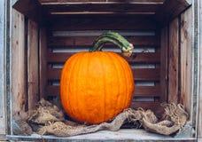 Todavía del otoño vida con las calabazas orgánicas Imagen de archivo