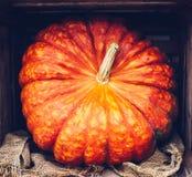 Todavía del otoño vida con las calabazas orgánicas Foto de archivo libre de regalías