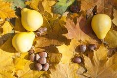 Todavía del otoño vida con las calabazas y las bellotas en las hojas de otoño fondo, primer Fotografía de archivo libre de regalías