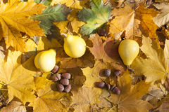 Todavía del otoño vida con las calabazas y las bellotas en las hojas de otoño fondo, primer Imágenes de archivo libres de regalías