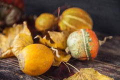 Todavía del otoño vida con las calabazas y las hojas en backgro de madera viejo Imágenes de archivo libres de regalías
