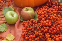 Todavía del otoño vida con las calabazas y las manzanas Fotografía de archivo