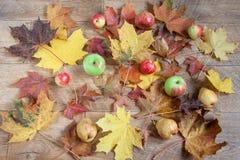 Todavía del otoño vida con las frutas y las hojas de arce Fotografía de archivo libre de regalías