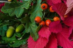Todavía del otoño vida con las frutas y verduras Foto de archivo
