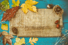 Todavía del otoño vida con las hojas de la caída y las plantas coloridas del bosque f Fotografía de archivo libre de regalías