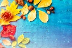 Todavía del otoño vida con las hojas de la caída y las plantas coloridas del bosque f Imagen de archivo libre de regalías