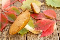 Todavía del otoño vida con las hojas de las setas, verdes y del rojo Imágenes de archivo libres de regalías