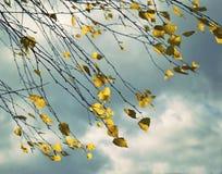 Todavía del otoño vida con las hojas del abedul amarillo Imagen de archivo libre de regalías