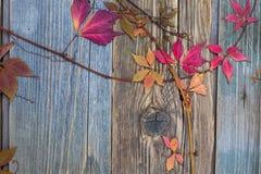 Todavía del otoño vida con las hojas rojas foto de archivo
